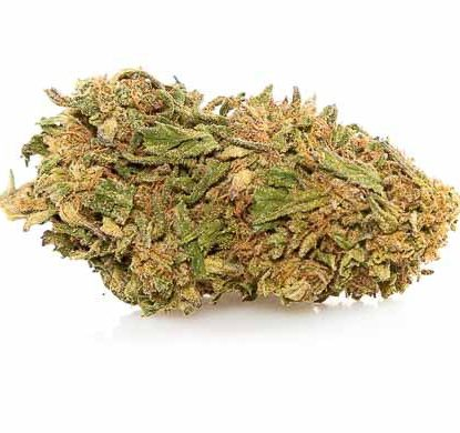 Bud of Lemon Cheese CBD weed