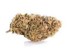 Bud of Lemon Cheese CBD weed