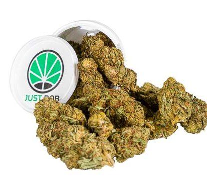 Mango-Haze-Box-Weed