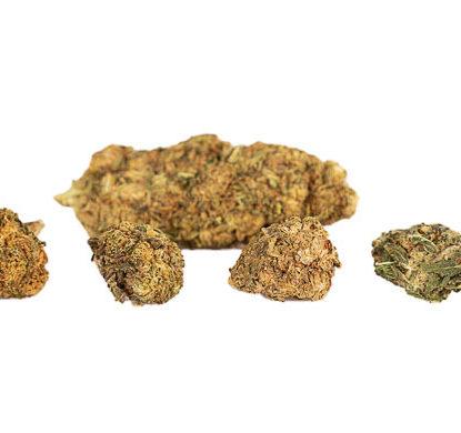 CBD Buds of Mango Haze legal cannabis