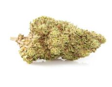 Orange Bud CBD flower of legal cannabis
