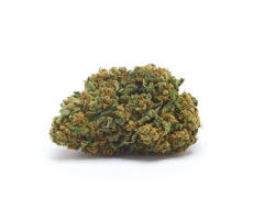 orange-bud-orange-weed-cbd-flower