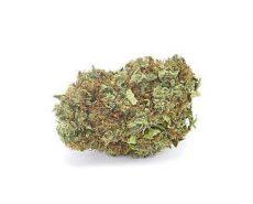 LEMON CHEESE | CBD Flower | CBD+CBDA > 16% | Just Bob