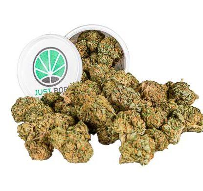 Bubblegum Box Weed