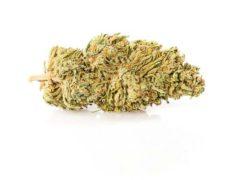 CBD Weed of Melon Kush