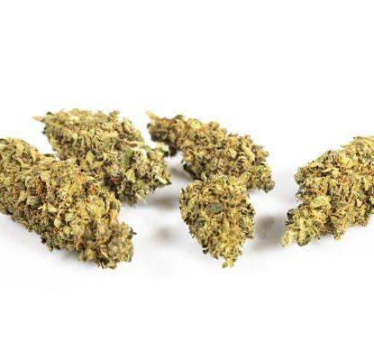CBD buds of Gorilla Glue Weed