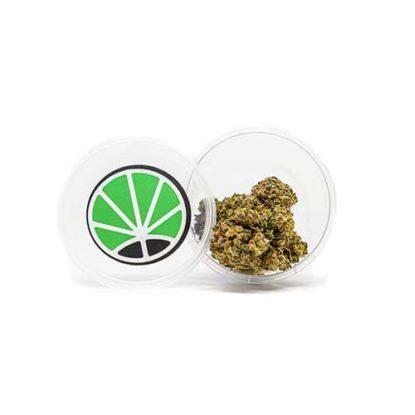 gorilla-glue-marijuana-flowers-weed-shop