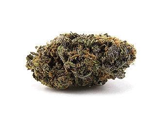 purple-haze-weed-purple-marijuana