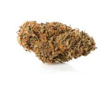 master kush cbd flowers cannabis light cbd