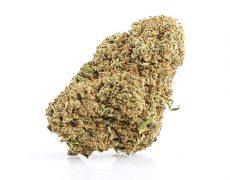 CBD Weed of master kush quality