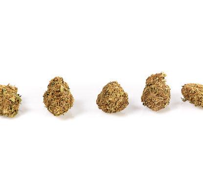 master kush weed buds cannabis indica