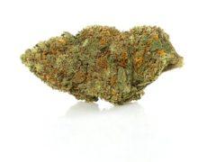 cbd weed california haze