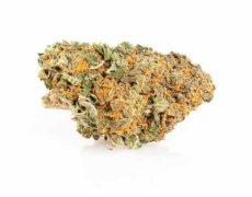 cbd-weed-california-haze
