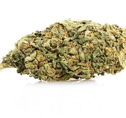 CBD Weed of Dos Si Dos variety