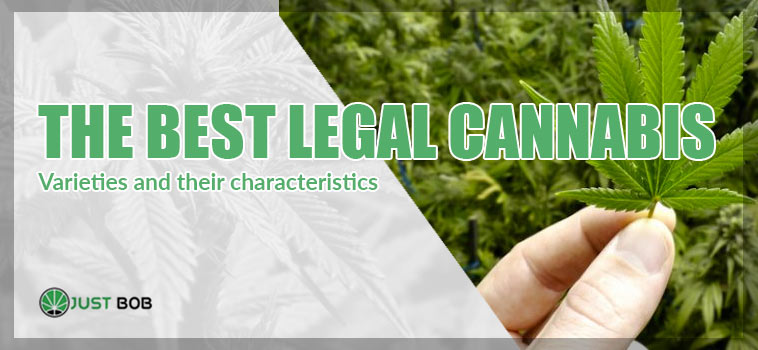 THE BEST LEGAL CANNABIS