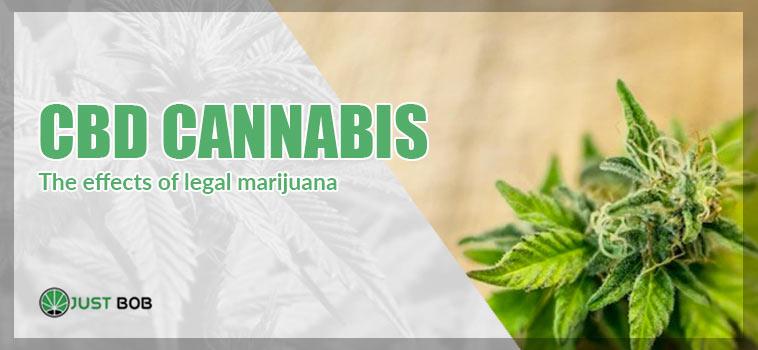 legal marijuana effects