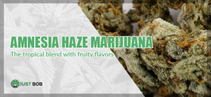 Marijuana Amnesia Haze justbob