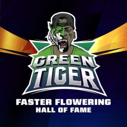 green-tiger-marijuana-seeds-uk