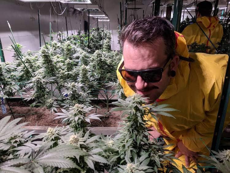 grow hemp legally