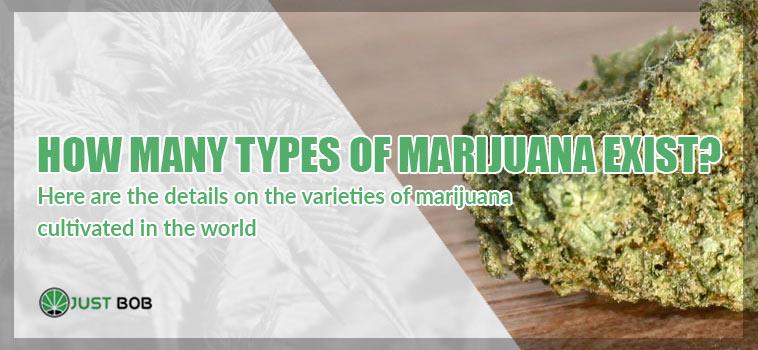 how many type of marijuana exist