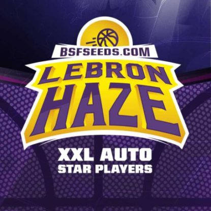 lebron-haze-marijuana-seeds