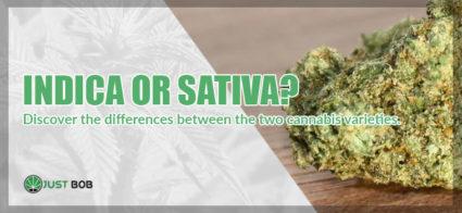 marijuana sativa or indica