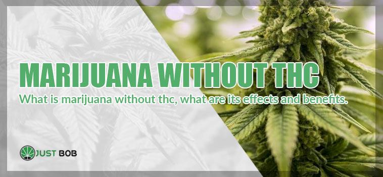 CBD marijuana whitout thc