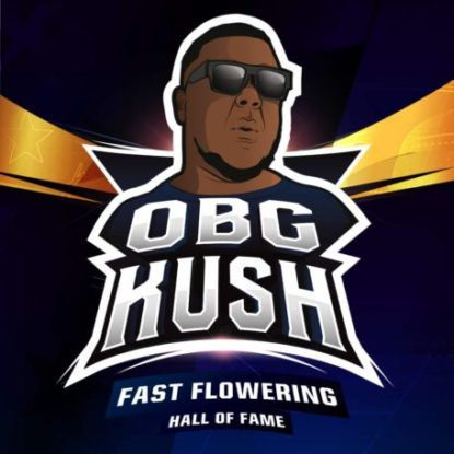 obg-kush-fast-flowering-marijuana-seeds