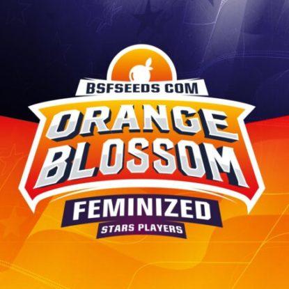 orange-blossom-femminisees