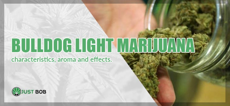 the best bulldog light marijuana online