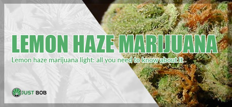 article cover: marijuana lemon haze