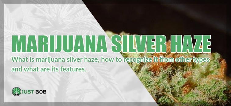original marijuana silver haze