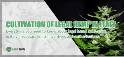 Cultivation of legal hemp in Italy