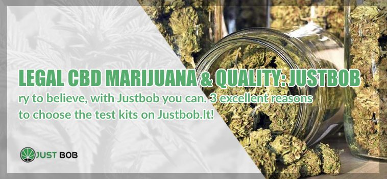 Legal CBD Weed and quality Justbob