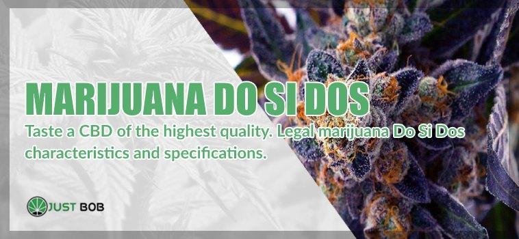 Do si Dos: taste this CBD Flowers of high quality