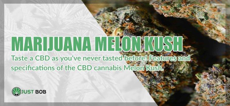 The Melon Kush CBD