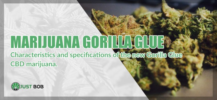 Marijuana light Gorilla Glue