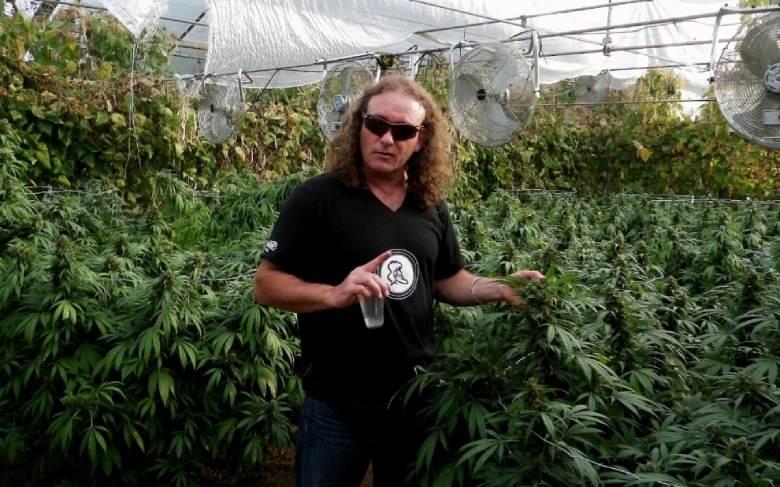 Shantibaba the possible father of white widow marijuana light