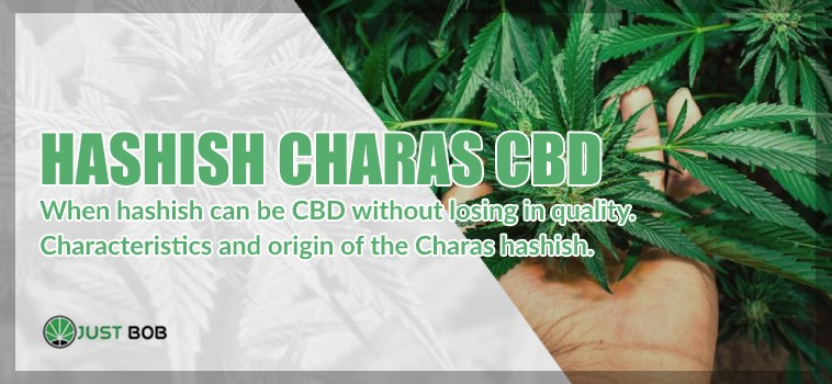 Charas: a good hashish cbd