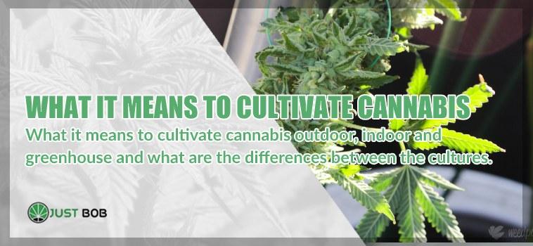 cbd cannabis cultivation