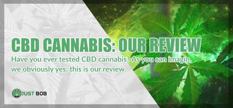 CBD Cannabis : our review