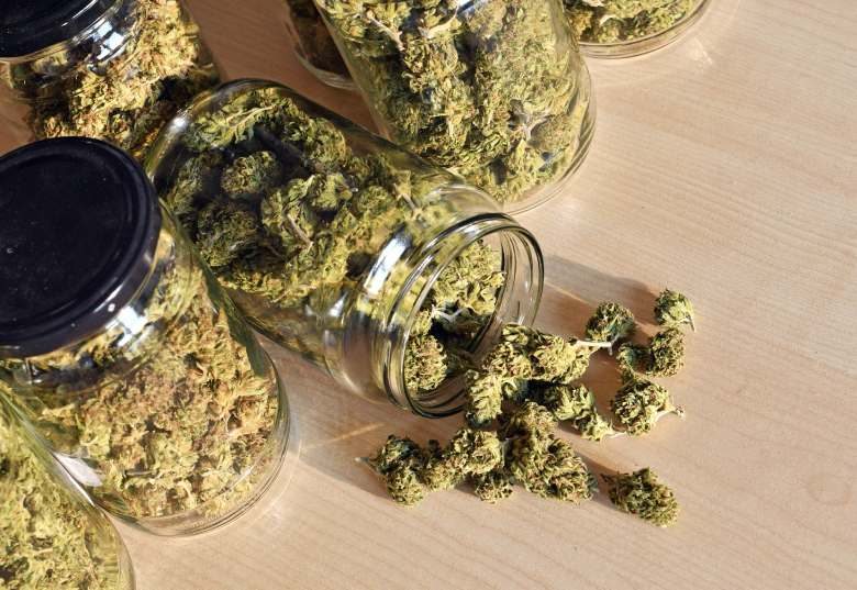 marihuana light optimally conserved in glass jars