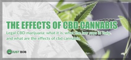 the effects of cbd cannabis