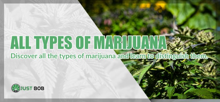 types of marihuana cbd