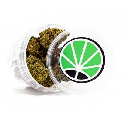 Package of Master Kush Buds
