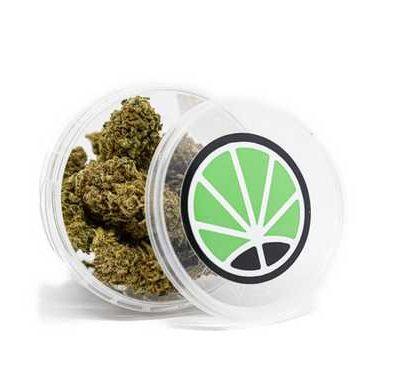 CBD bud box of White Widow legal cannabis