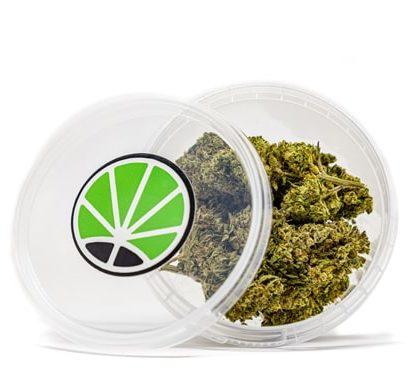 gorilla glue weed cannabis uk shop