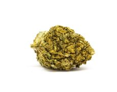 Flower of Legal cannabis Lemon Cheese