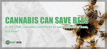 Cannabis cbd can save bees