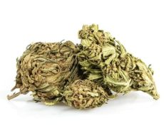 Cannabis-cbd-outdoor-buds-mix